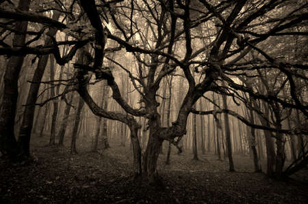 Mysterious dark tree with huge branches in a dark forest with fog