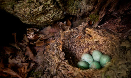 Nest with eggs guarded by a frog in tree burrow photo
