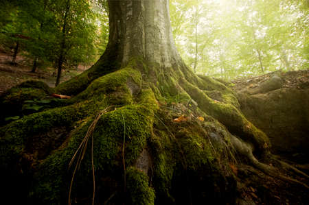 tree roots: Roots of tree covered with green moss in a forest in summer