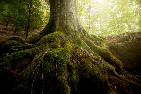 Wortels van de boom bedekt met groene mos in een bos in de zomer