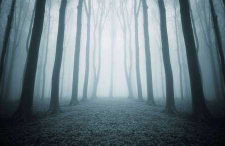 Road trough a dark mysterious symmetrical forest with fog Standard-Bild