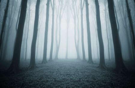 Weg door een donker mysterieus symmetrische bos met mist