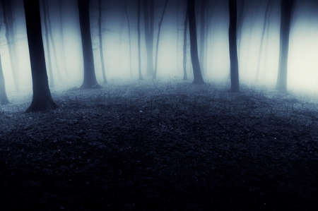 Dark mysterious scary forest with thick fog trough trees at night