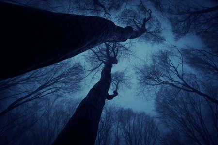 Photo of trees reaching up to the sky in a forest with fog at night photo