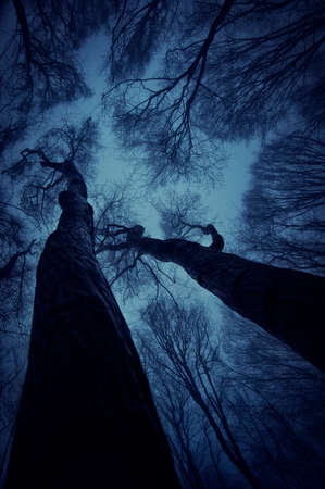 Vertical photo of trees reaching up to the sky in a forest with fog at night photo