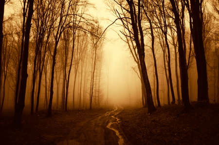 Road going trough a mysterious dark scary forest with fog Stock Photo