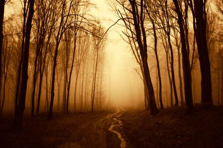Weg gaat via een mysterieuze donkere enge bos met mist