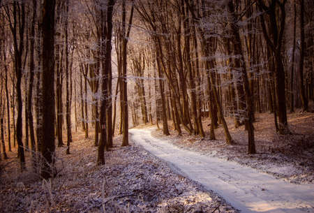 Road with snow in a frozen forest at sunrise in winter photo