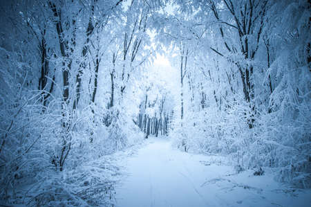 Frost and snow in a forest in winter