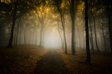 Dark forest with thick fog in late autumn