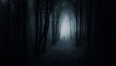 eerie: Man walking in a creepy dark forest with fog Stock Photo