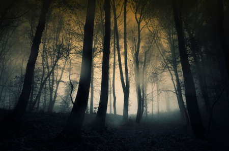 mystery woods: Dark forest with rain and fog in late autumn Stock Photo