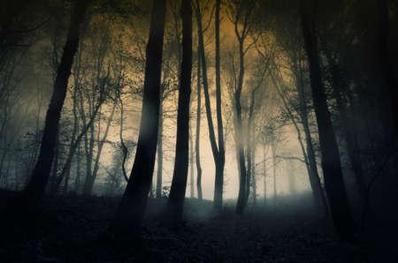 Donker bos met regen en mist in de late herfst Stockfoto