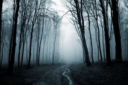 eerie: Road trough a dark creepy forest with fog on halloween