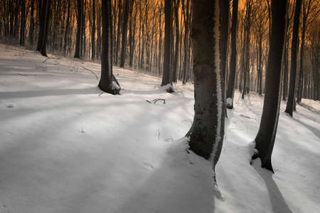 trough: Snow trough trees in a forest in winter with sun shining Stock Photo