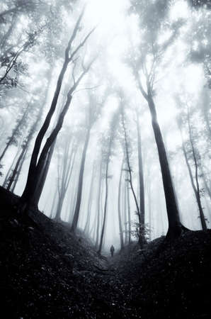 man walking through a huge dark forest with black trees  Stock Photo