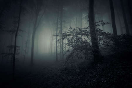 Surreal dark scary mysterious forest with fog in late autumn photo