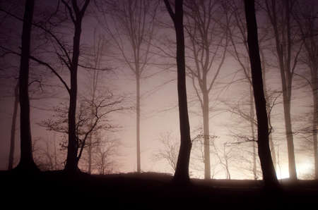 Light in a mysterious forest with fog at night  photo