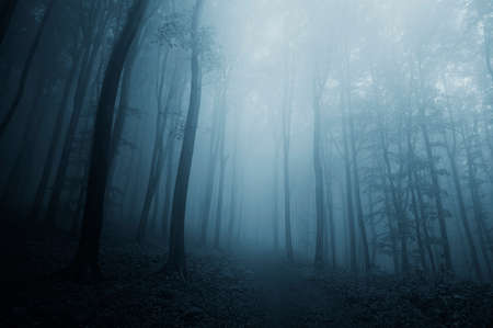 mystical forest: Dark blue forest with fog on halloween night