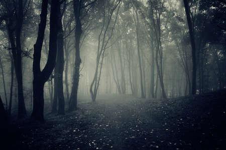 ハロウィーンの霧と暗い不気味な森のパス