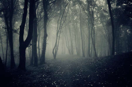 houtsoorten: Pad in een donker spookachtig bos met mist op Halloween Stockfoto