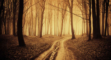 Road in enchanted mysterious forest with fog on Halloween Standard-Bild