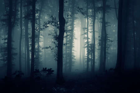 Dark mysterious forest on Halloween with blue fog photo