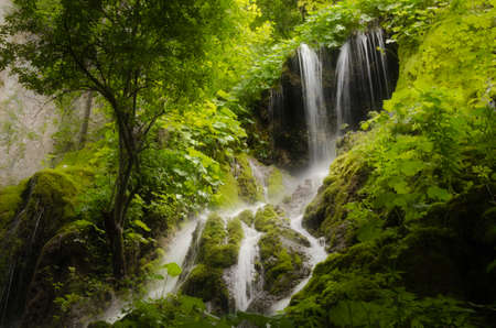 waterfall and dense vegetation in green forest  photo
