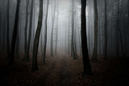 dark forest: Path trough a dark mysterious forest on Halloween Stock Photo