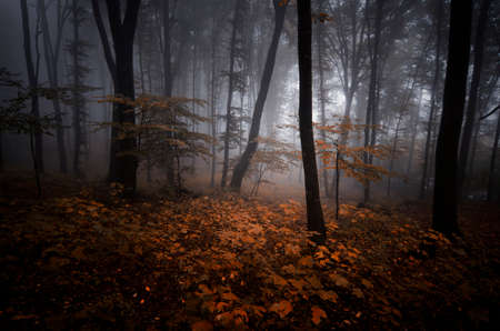 Dark spooky forest in autumn on Halloween with fog