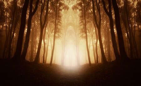Symmetrisch beeld van bos met licht en mist Stockfoto