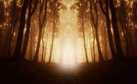 Symmetrical image of forest with light and fog