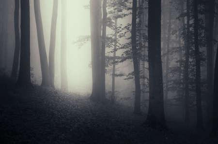 dark woods: Dark woods with fog