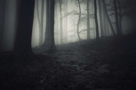 mystical forest: Dark creepy forest on Halloween night Stock Photo