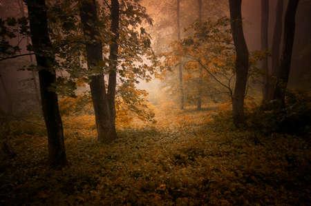 Geheimzinnig bos met mist in de herfst