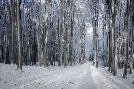forest path: Path trough a frozen forest in winter Stock Photo