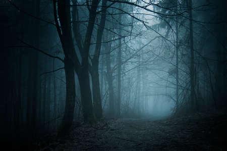 Ścieżka w ciemnym tajemniczy las z mgły w noc Halloween