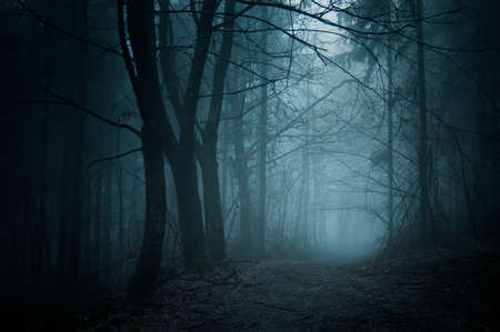 Path in a dark mysterious forest with fog on Halloween night Foto de archivo
