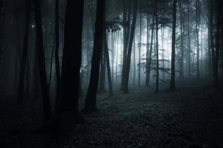 scary night: Dark scary forest with fog at night