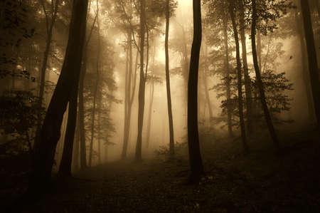 Dark Halloween forest with fog photo