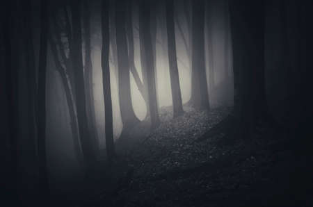 Scary woods on Halloween night with fog