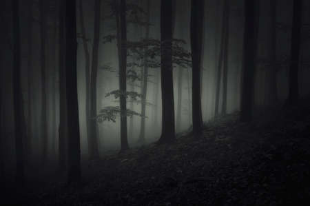 Deep dark scary woods at night