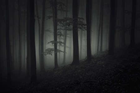 Deep dark scary woods at night