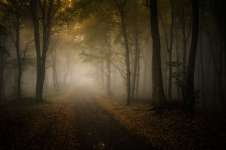 rainy season: Path road trough a mysterious forest with fog in autumn Stock Photo