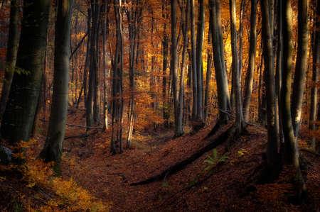 Herfst in een kleurrijk bos Stockfoto