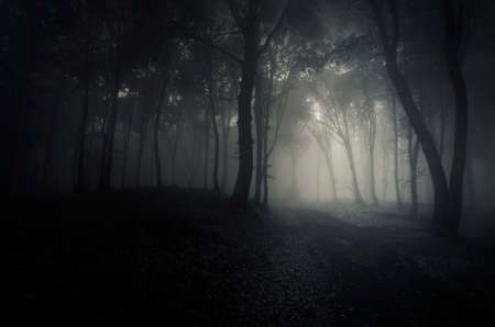 clearing the path: Path clearing in a dark forest with fog on Halloween