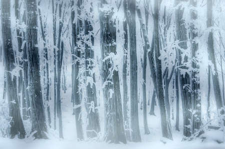 blizzard: Frozen forest with blizzard and fog