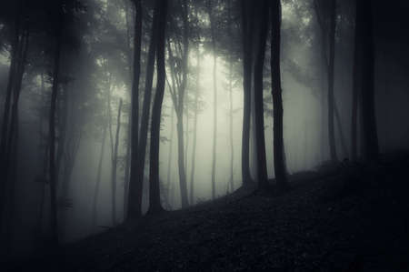 Dark scary forest with fog