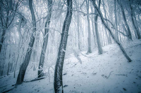 Frozen forest with frost on trees in winter photo