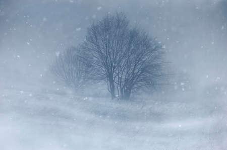 Trees on meadow in blizzard in winter 스톡 콘텐츠